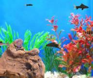 Тайкун Аквариумные рыбки