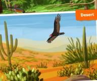 Определи место обитания птицы по звуку